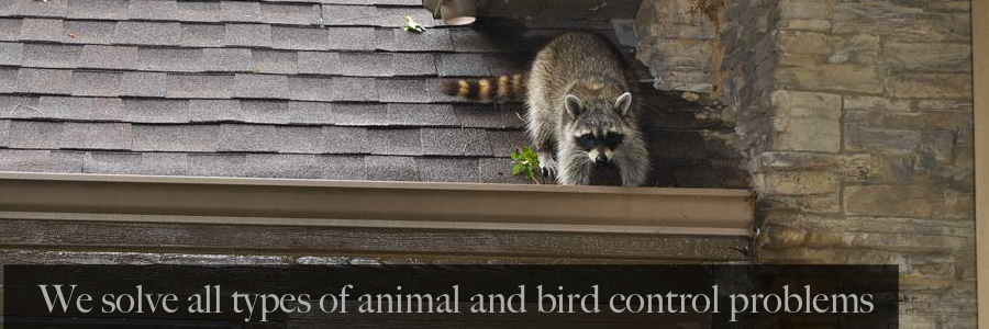 We solve all your animal and bird problems | Wildlife and Waterfowl Solutions