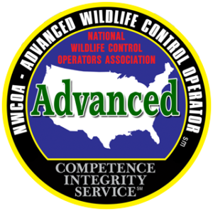 Advanced Wildlife Control Operator